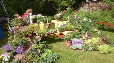 Mehr zu Gärtnerei Sommerfeld