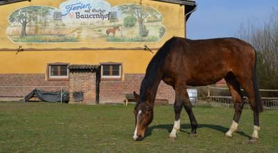 Mehr zu Reiterhof und Pension - Naturbauernhof Gierke in Drense